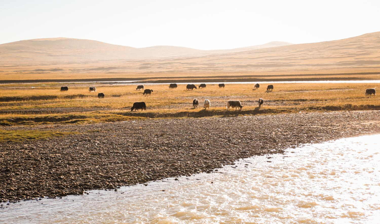 可可西里自然保护区介绍 可可西里自然保护区攻略