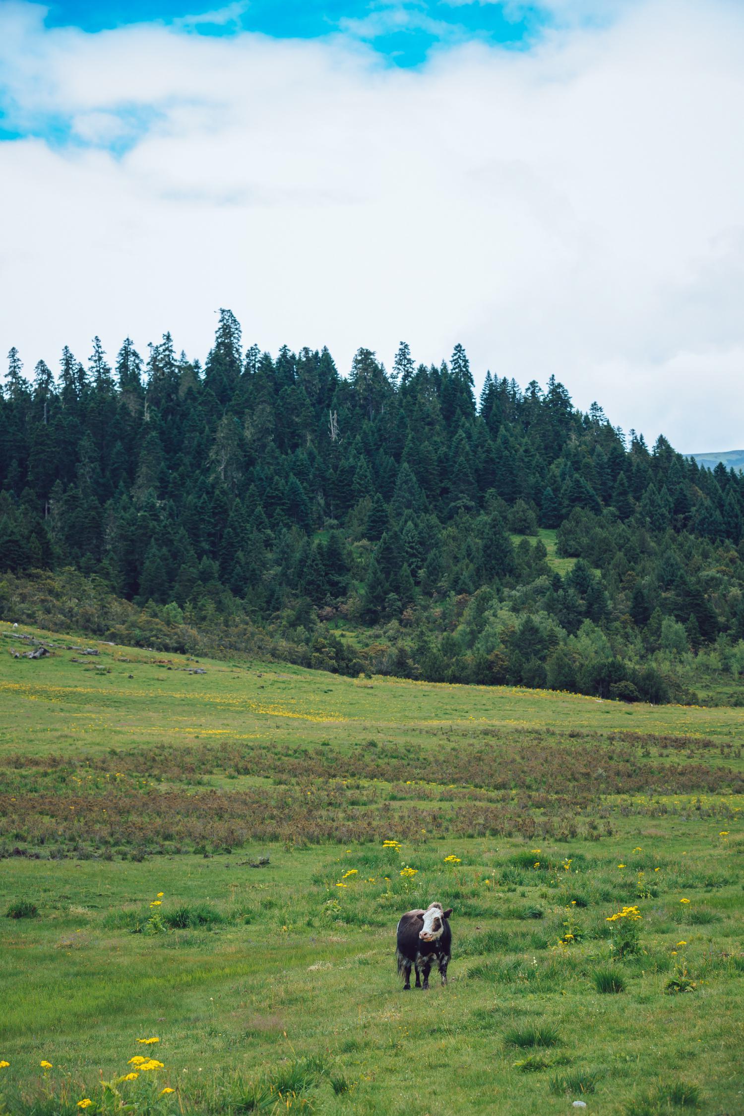 武隆自驾游景点推荐,仙女山森林公园攻略
