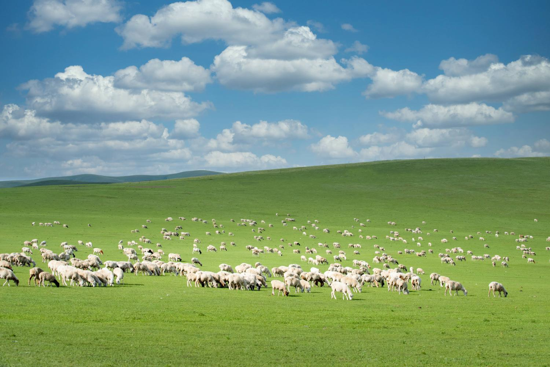 【自驾游攻略】美丽的呼伦贝尔大草原,强壮的套马汉子