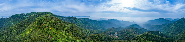 万籁俱寂的小森林,莫干山风景区