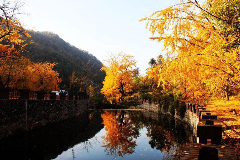 湖北武汉周边2日自驾游:随州千年银杏谷-大洪山风景区2天周末赏秋之旅