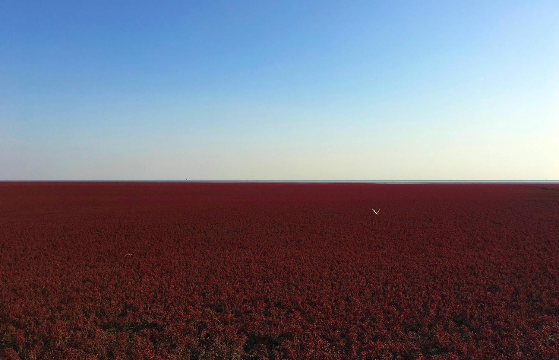 辽宁7天自驾游沈阳故宫,长白山天池,盘锦红海滩,鸭绿江