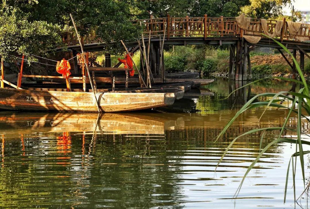 广东少数人知道的,古劳水乡游玩